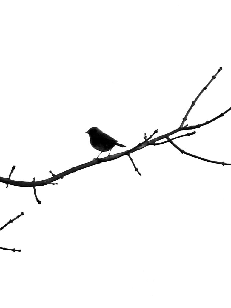 bird silhouette by girlygamergeek on deviantart