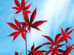 Japanese Maple Leaf by GirlyGamerGeek