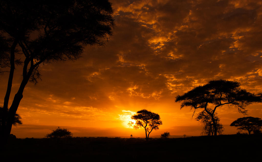 Tarangire sunset by SCHPONG