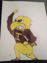 Herky the Hawk by Luv2fly0714