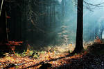 forest stock by Traumsturm