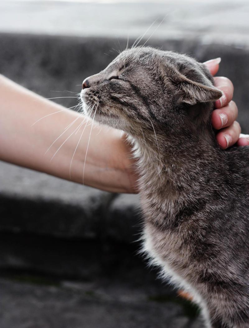 love my cat by erinche