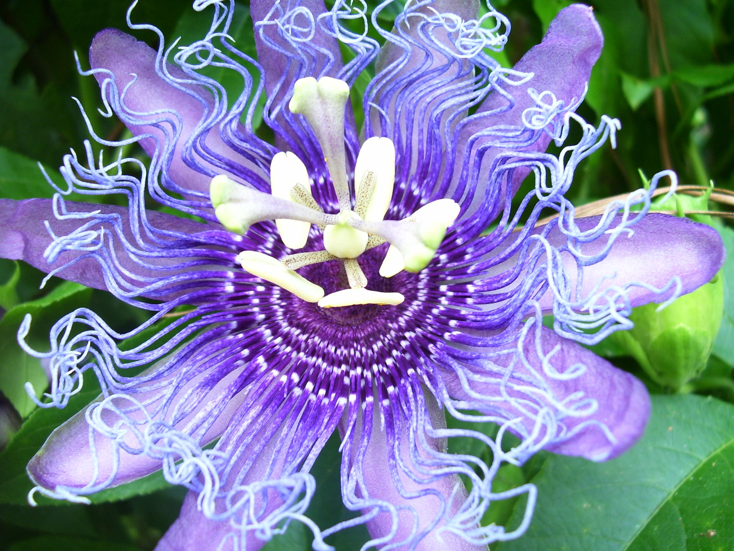 crazy flower by wolfpilot on deviantart