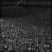 farmvilleXXI by ChristianBurtscher