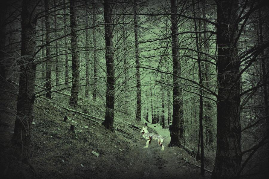 ghost wolf in dark forest by WolfSoul101 on DeviantArt