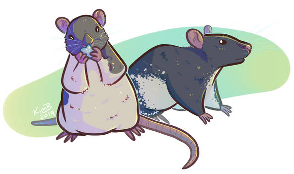 Berry and Butler the Fancy Rats