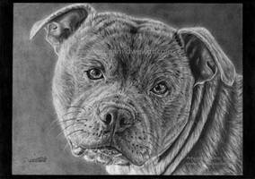 Ice the dog by DeanSidwellArt