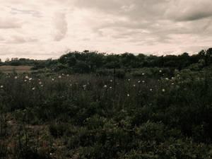 Monochrome Field