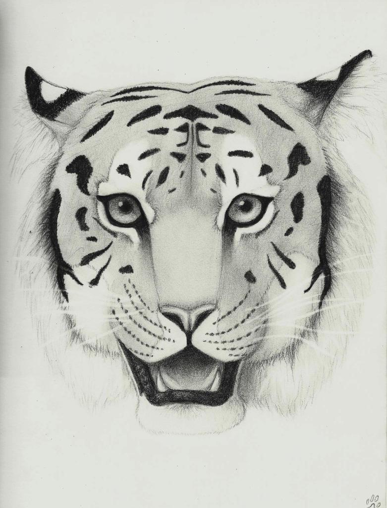 Tiger by MoonlightGuardianOwl