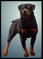 Rottweiler by Chibii-Kira