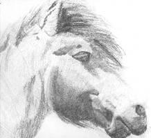 Horse head in pencil
