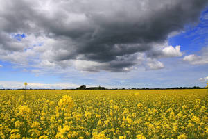 Fields of gold by Naturelady00