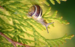 The journey of snail by Naturelady00