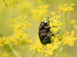 Dreamland of May bug by Naturelady00