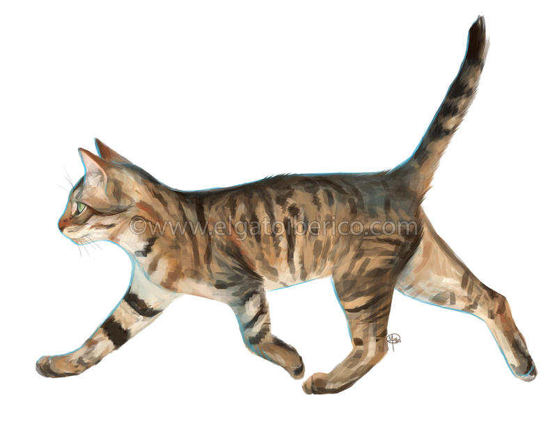 Bengal Paint-Sketch by Gato-Iberico