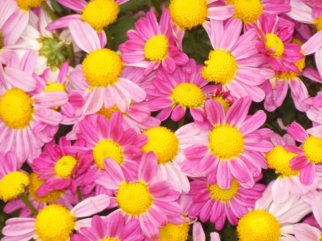 Just Flowers by Finnyanne on DeviantArt