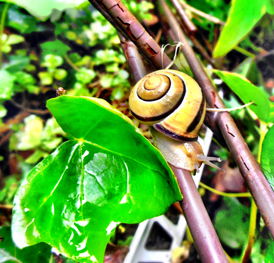 Snail with yellow house by Finnyanne