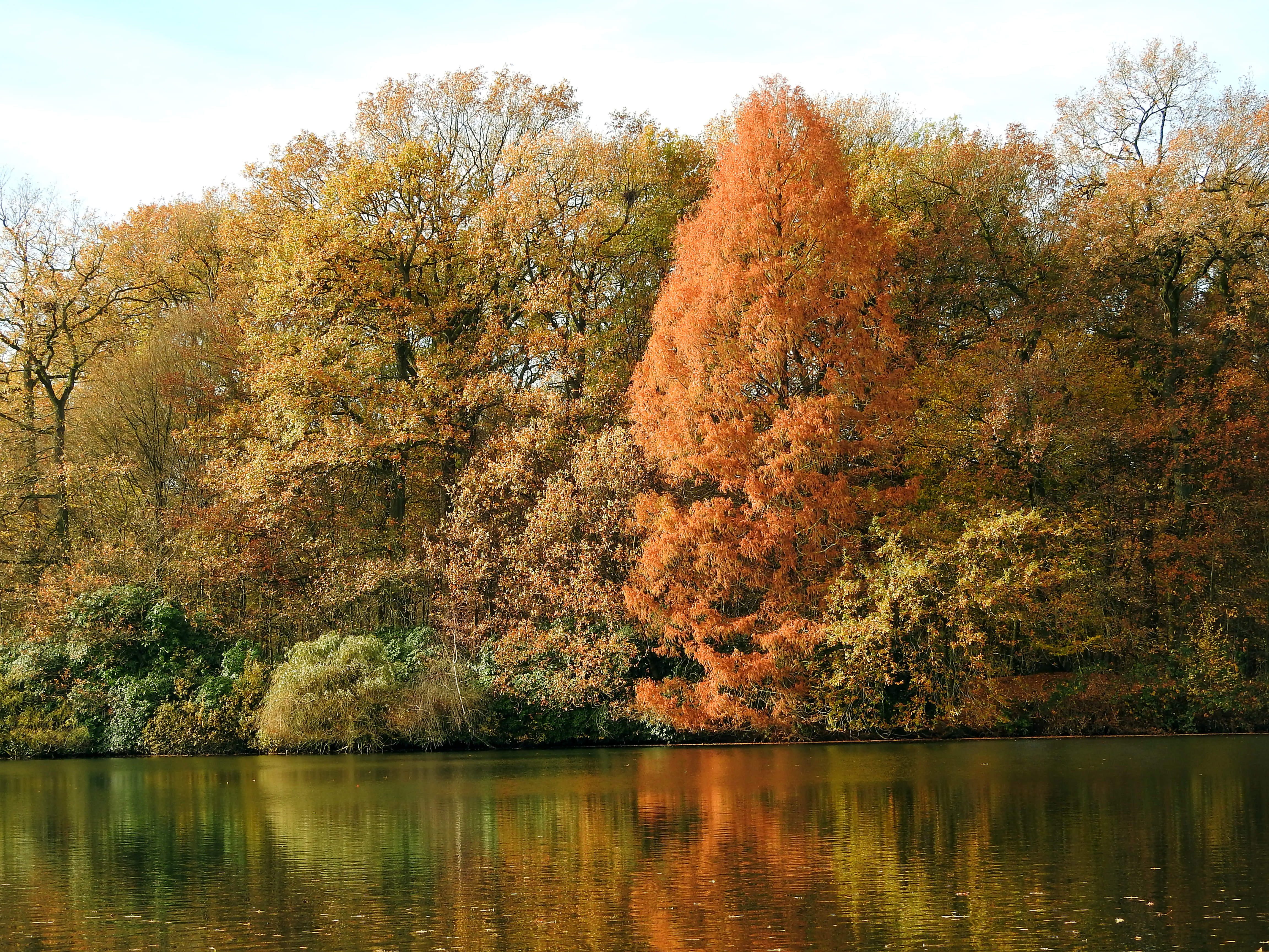 Fall at the lake by Finnyanne
