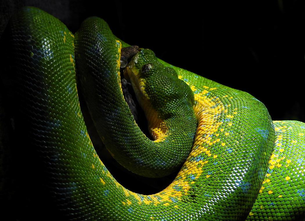Green Beauty by Finnyanne