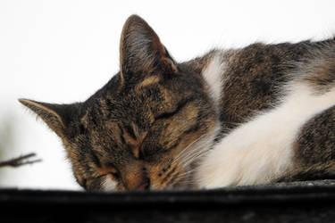 Cute Sleepyhead by Finnyanne