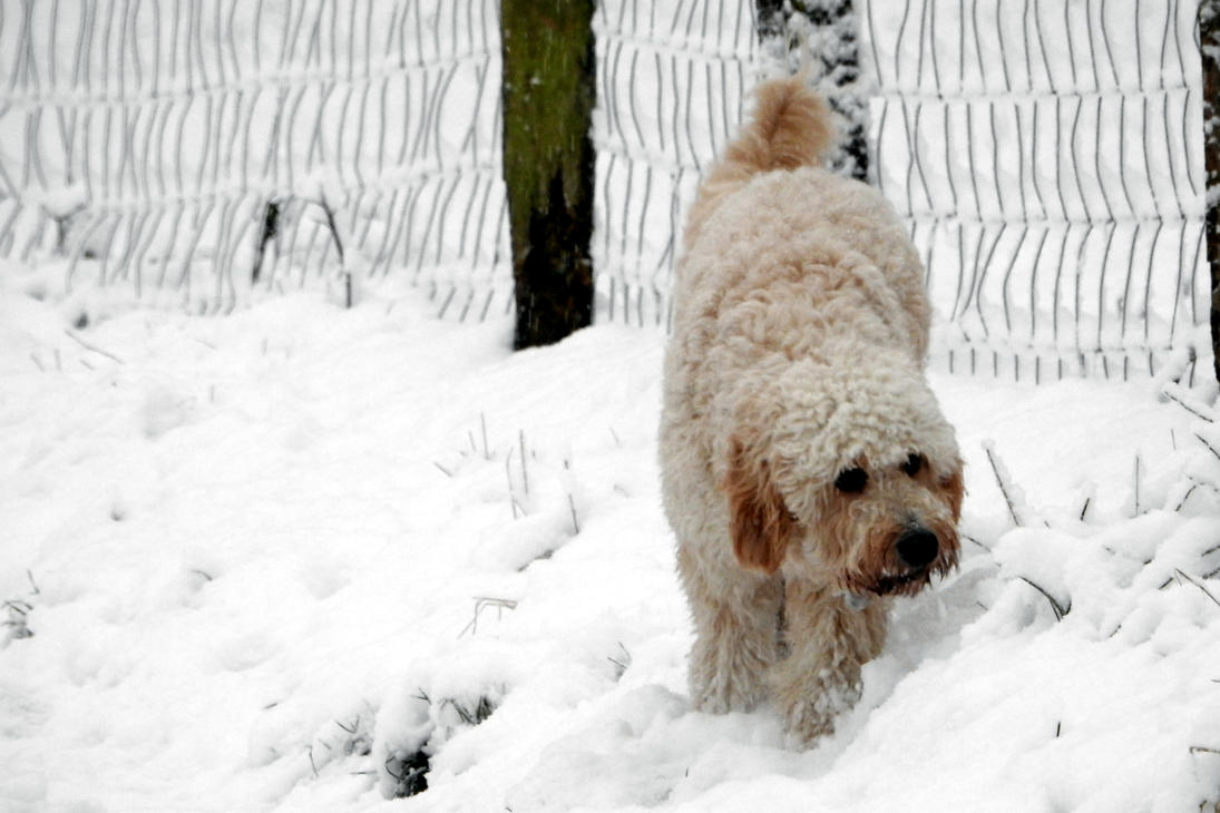 Fun in the snow by Finnyanne