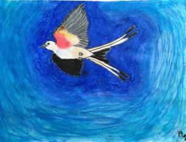 Scissor-tailed Flycatcher by erbyderby24