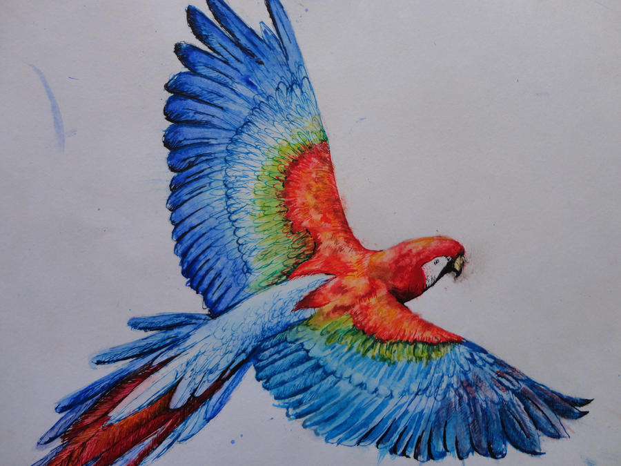 how to draw a parrot flying