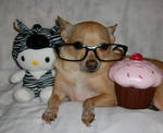 HelloKitty Can Not Has Cupcake