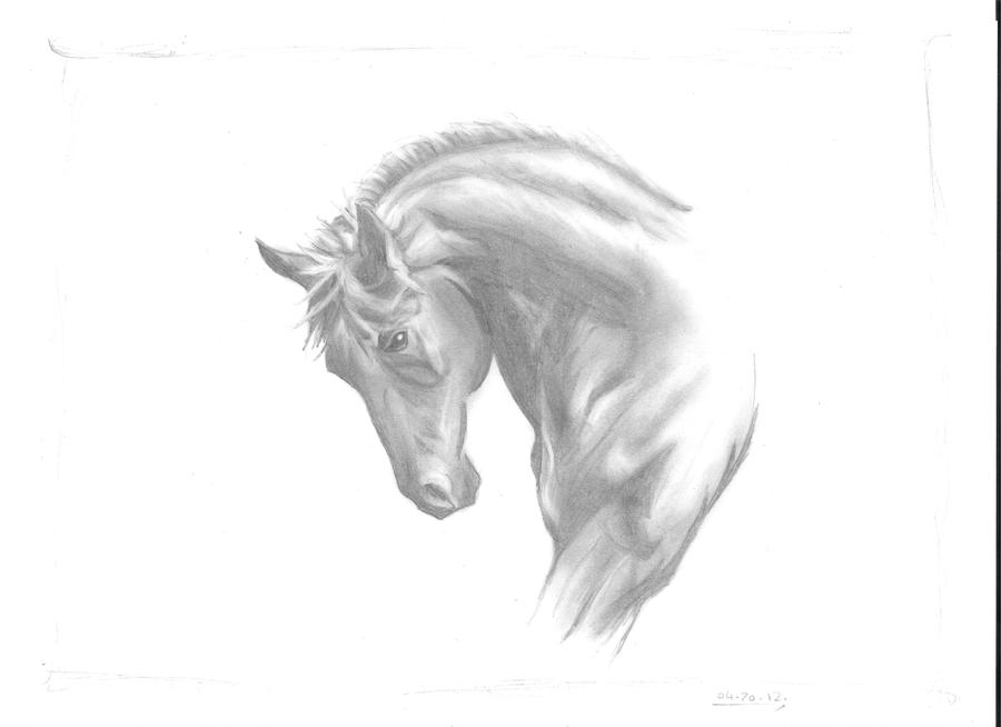 Free Spirit - Horse Sketch by Gingerninjachan on DeviantArt