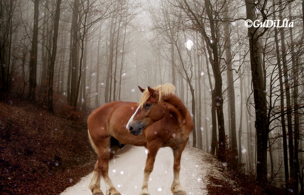 Draft horse in  forest by GuDillia