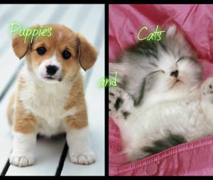 Puppiesandcats's Profile Picture
