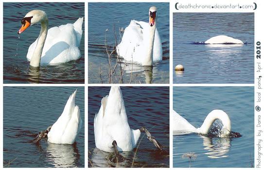 Random goose shots
