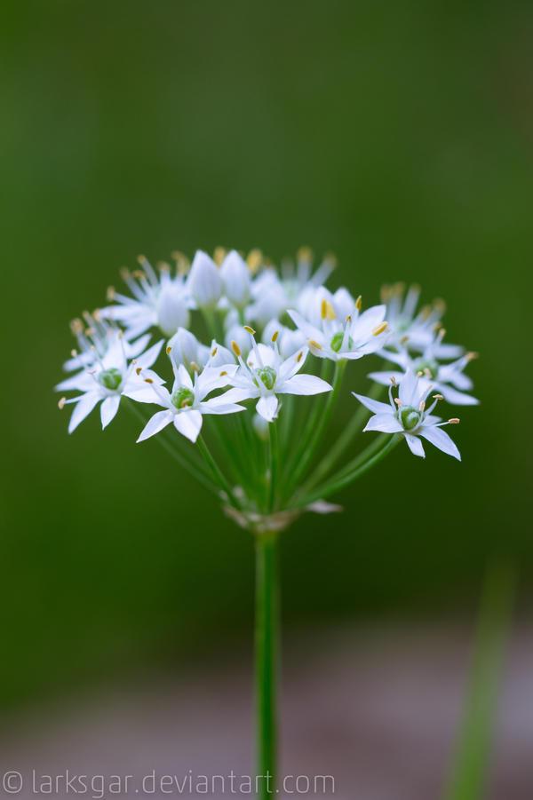 Natural Bouquet by larksgar