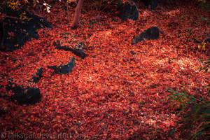 My own garden by larksgar