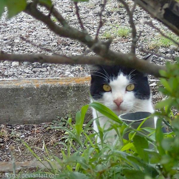 Sneaking by larksgar