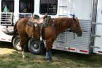 Cowboy shooting10