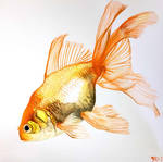 Goldfish Fancy Fins Watercolor