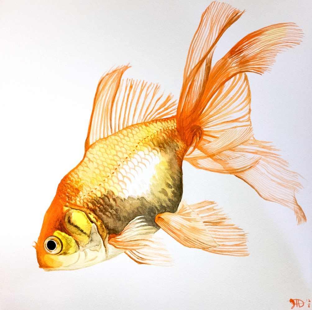 Goldfish Fancy Fins Watercolor