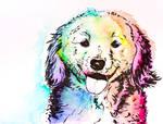 colorful dog #2
