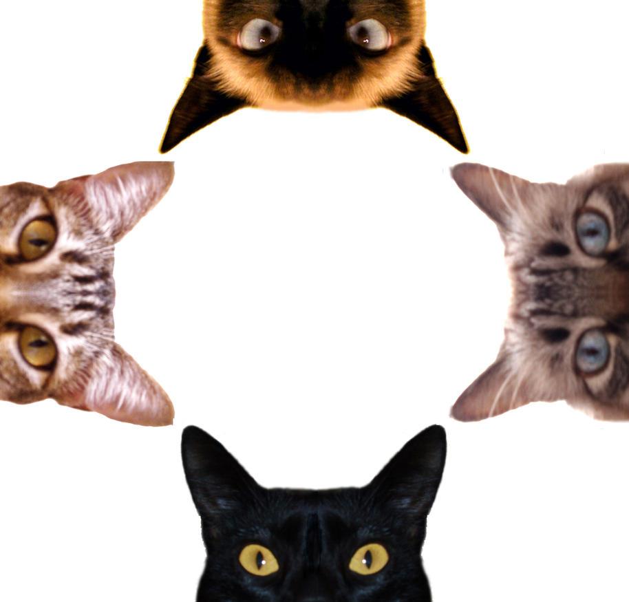 http://th07.deviantart.net/fs11/PRE/i/2006/232/4/8/My_lovely_cats_by_Paulinha_H.jpg