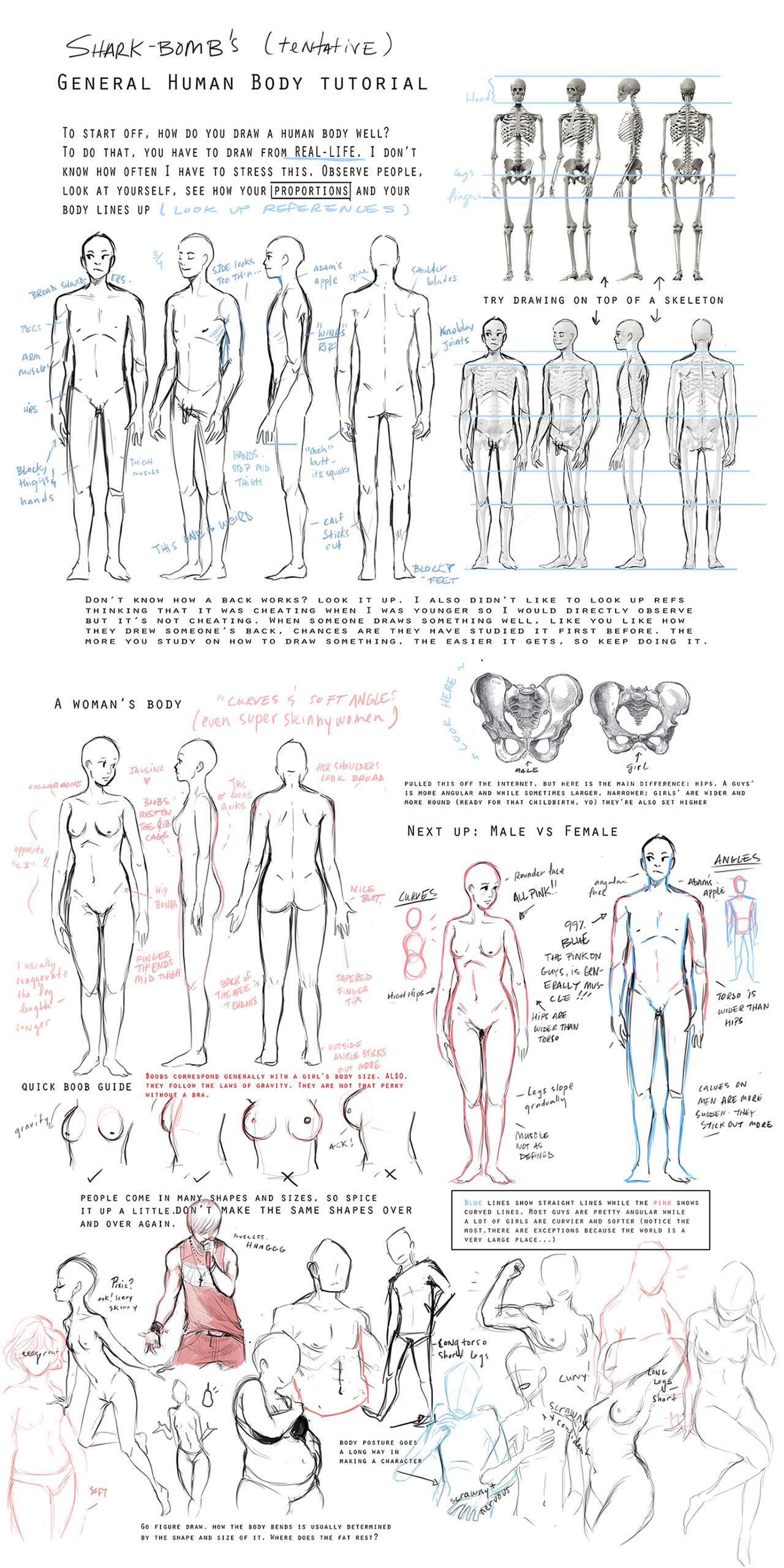 General Body Tutorial by shark-bomb on DeviantArt