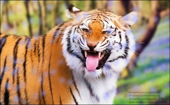 Petal Tiger