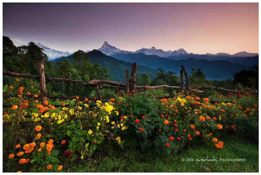 A Marigold Dawn by Dee-T
