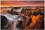 Tarkine Coast