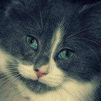 Meet my new kitten.