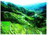 Philippines: Banaue Rice Terraces by etheara