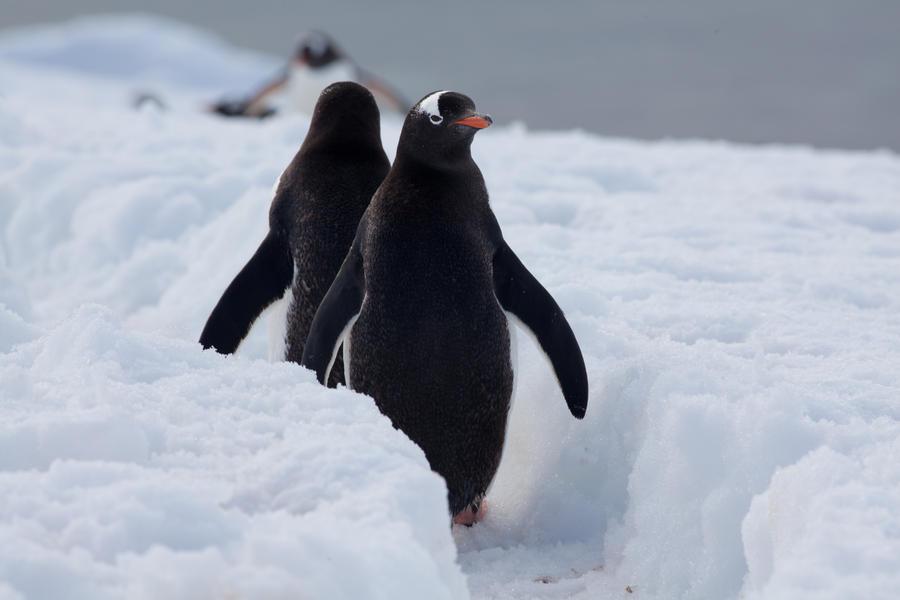 Exorcist Penguin by pinguino