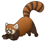 Red Panda by Raccoonish