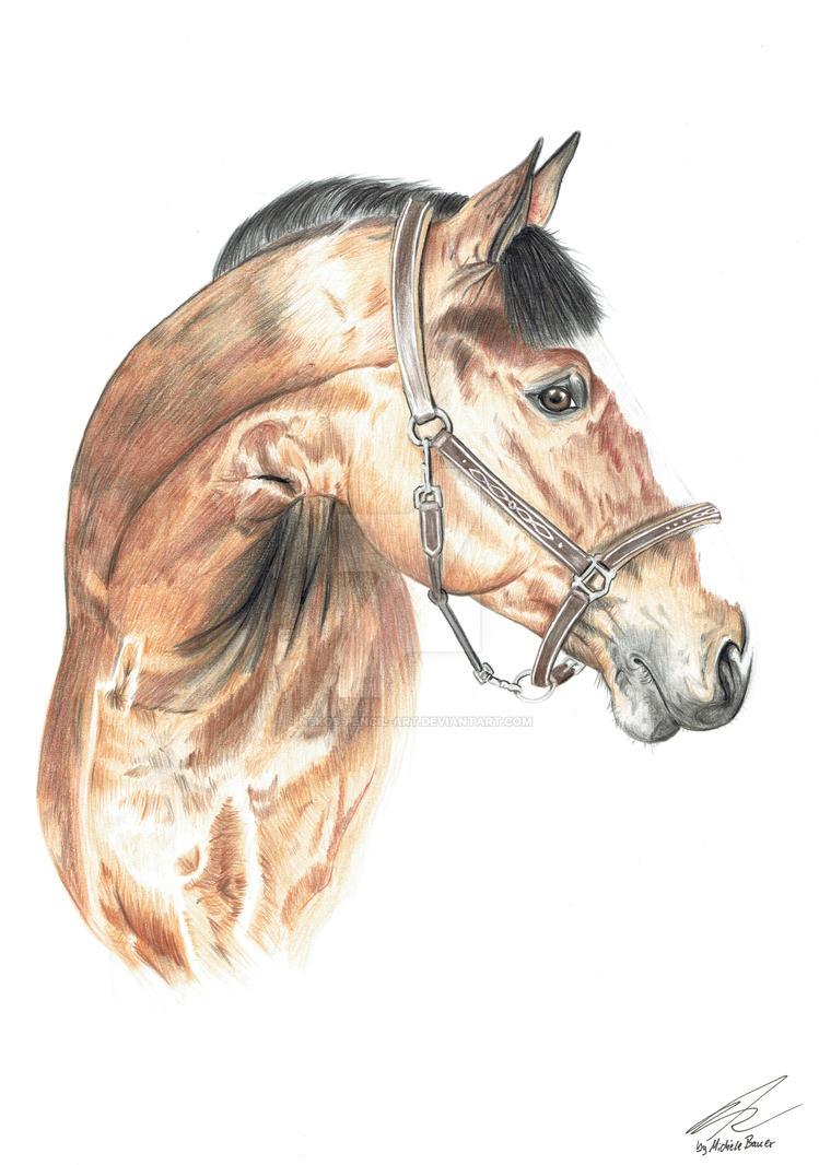 realistic horse drawing by Nekos-Pencil-Art