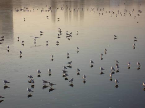 Birds on a frozen lake